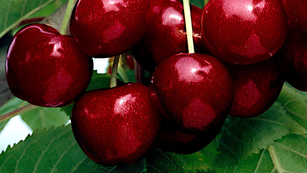 Cherries The Sex Symbol Fruit That Is Actually Very Good -3352