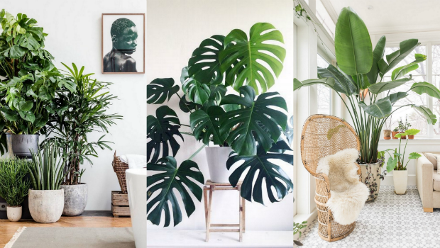 A list of the best indoor plants for fabulous home decor for Living room with indoor plants
